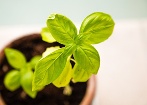 3 growth investing tips to boost your investment returns