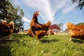 Vital Farms Inc. went public on positive sentiment and rising revenues